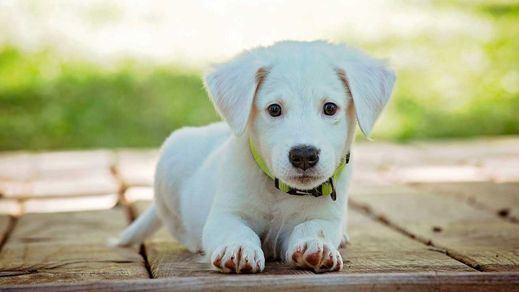 Descubre los mejores consejos para que tu perro sea más feliz