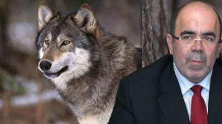 El lobo quedará más protegido en Cantabria con la modificación de la ley de caza