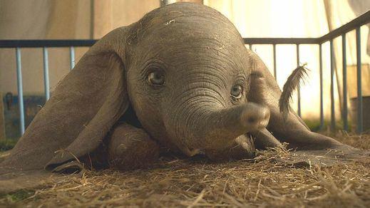 Por fin llega el tráiler del remake de 'Dumbo'