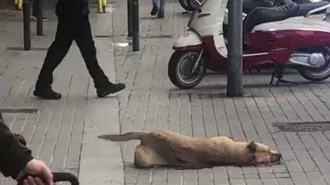 Barcelona se manifestó indignada contra la ejecución de la perrita Sota por un guardia urbano