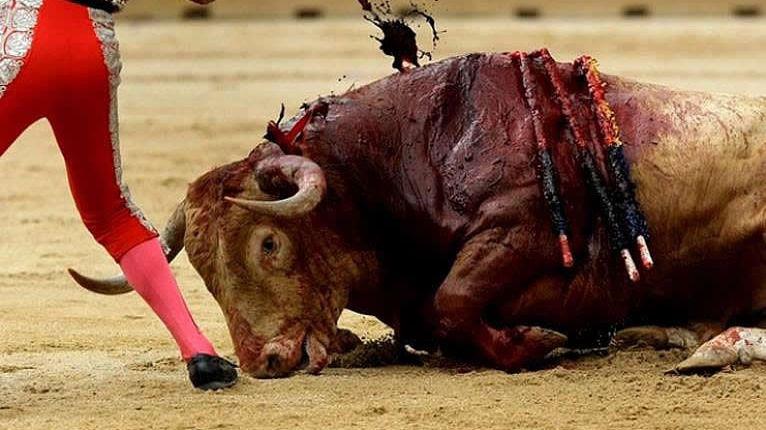 El Tribunal Constitucional tumba la ley de Baleares que prohibía matar al toro