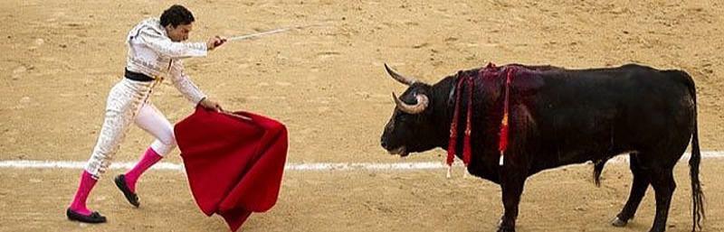 El único inocente dentro de la Fiesta es el toro...