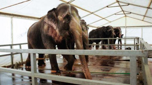 Madrid prohíbe los circos con animales