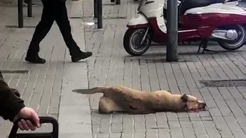El Pacma denuncia al Ayuntamiento de Barcelona y al policía local que mató a la perrita Sota
