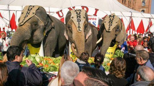 El Ayuntamiento de Madrid se suma al fin al veto a los circos con animales