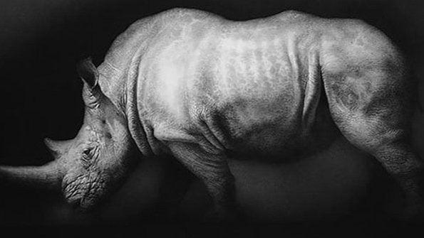 'El último rinoceronte blanco' y el abismo de vivir