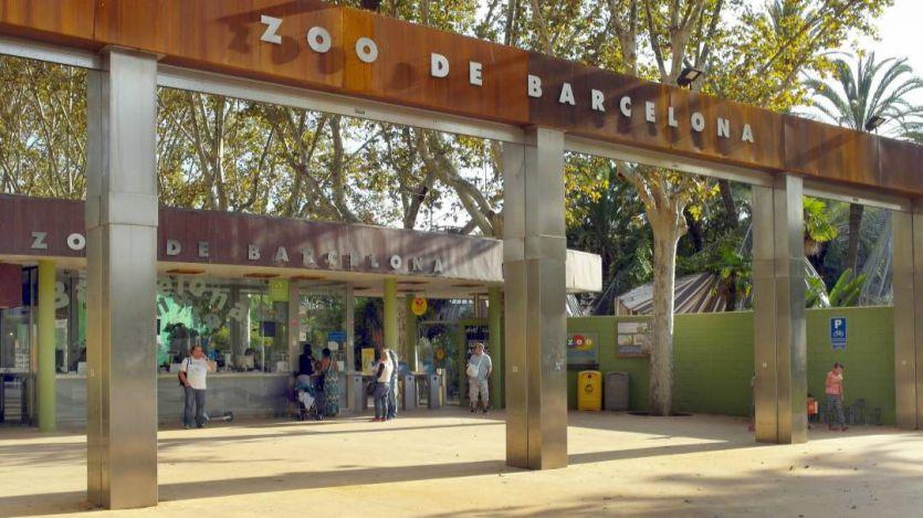 Polémica en Barcelona con el nuevo modelo de su zoo, que dejará el formato tradicional