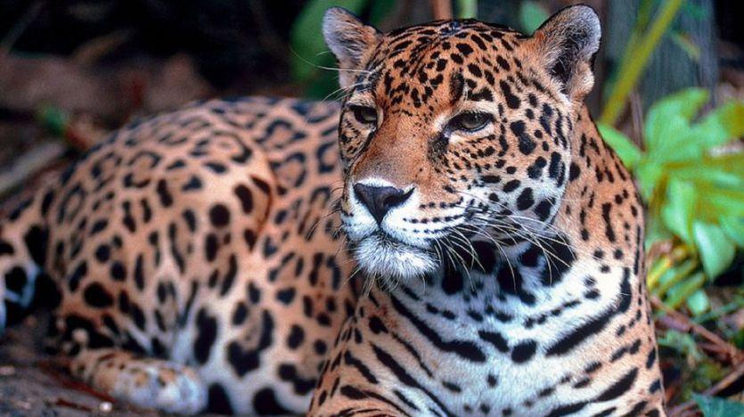 La ONU alerta de que un millón de especies de animales y plantas pueden extinguirse en pocas décadas