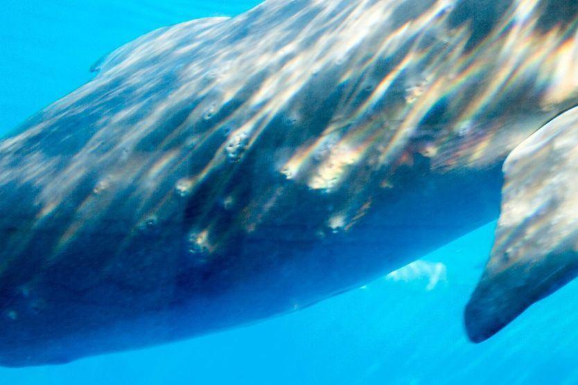 Lío en el Zoo de Madrid, denunciado por un supuesto maltrato a sus delfines