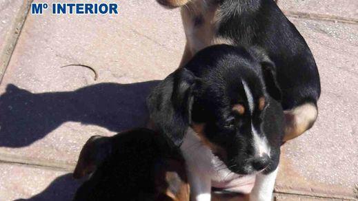 Condenada a 6 meses por dejar morir a su perro en la terraza, sin alimento ni agua