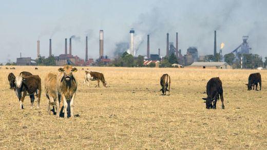 La ONU pide consumir más verduras y aumentar los salarios para salvar el planeta