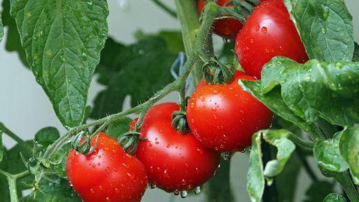 La agricultura ecológica aumentó un 8% en 2018