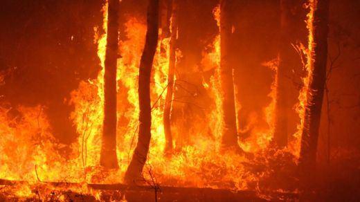 El incendio de Gran Canaria sigue sin estar controlado pero una noche fresca y sin vientos ayuda a contenerlo