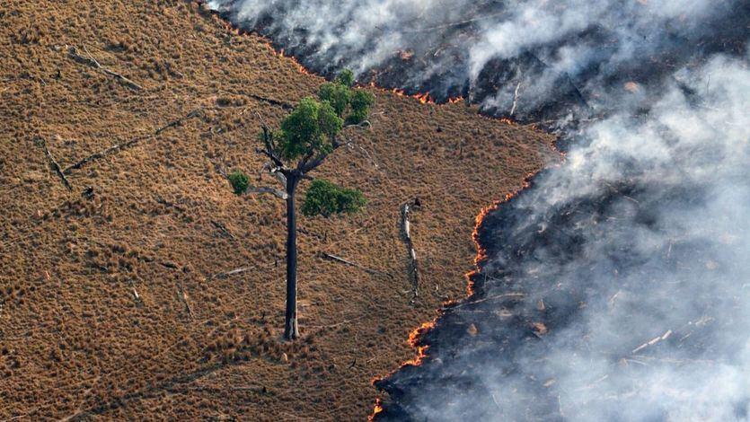 Bolsonaro denuncia una 'psicosis ambiental' y la presión internacional por el incendio del Amazonas