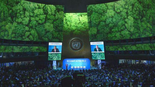 La Cumbre del Clima de Madrid (COP25) necesita contar con la biodiversidad para alcanzar el Acuerdo de París