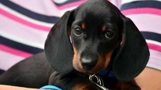 La Exposición Mundial Canina se pospone para diciembre de 2020