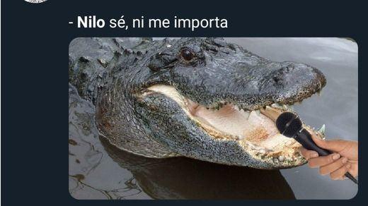 Los mejores memes sobre el avistamiento de un cocodrilo en Valladolid