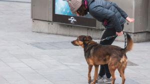 Pasear al perro en estado de alarma: ¿afecta el toque de queda?
