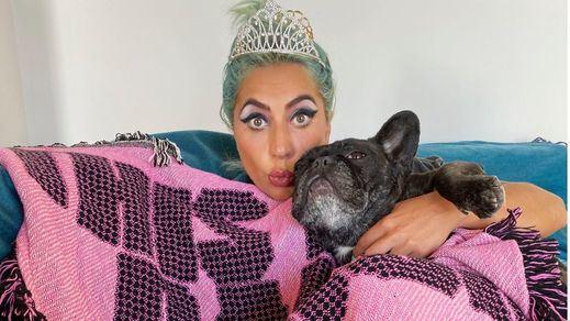 Disparan al paseador de perros de Lady Gaga para robarle los bulldogs