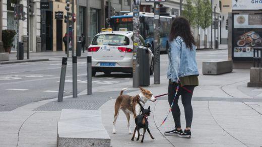 El cuestionado estudio que asegura que perros y gatos sí pueden infectarse por el coronavirus y que les provoca miocarditis