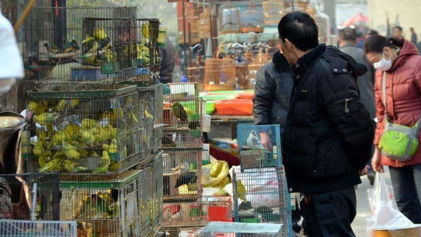 La OMS pide prohibir a nivel mundial vender animales salvajes vivos en los mercados de alimentos