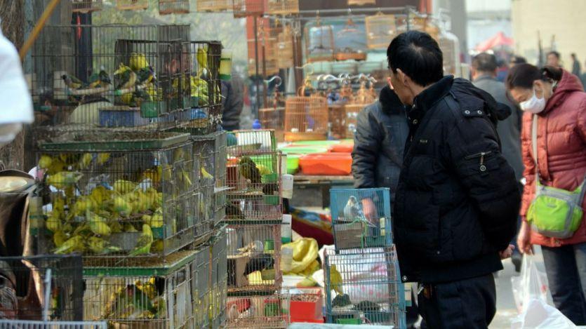 Se encienden de nuevo las alertas sanitarias: detectan en China el primer caso de gripe aviar H10N3 en humanos