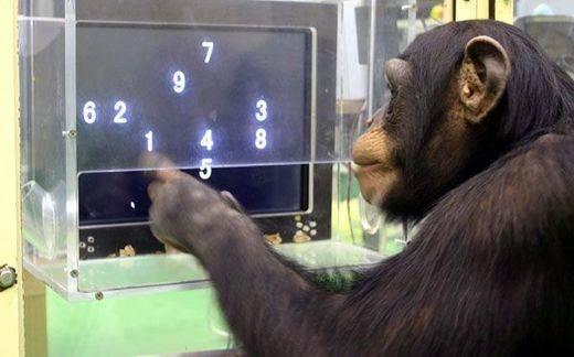 Increíble pero cierto: monos transcriben textos a 12 palabras por minuto