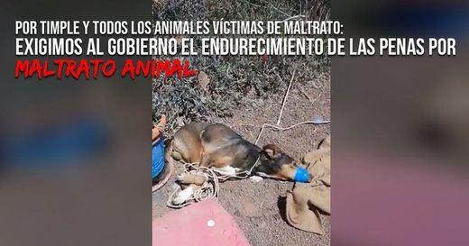 El Pacma pide endurecimiento del Código Penal por maltrato animal tras el caso de Lanzarote