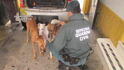 Tiran a 3 perros vivos a un pozo porque ya no servían para la caza