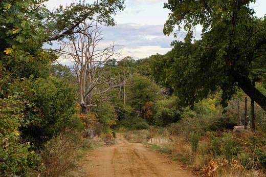 La Sierra de San Vicente apuesta por la recuperación de su castañar