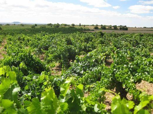 Agricultura abrirá al sector el debate de la reestructuración de viñedo