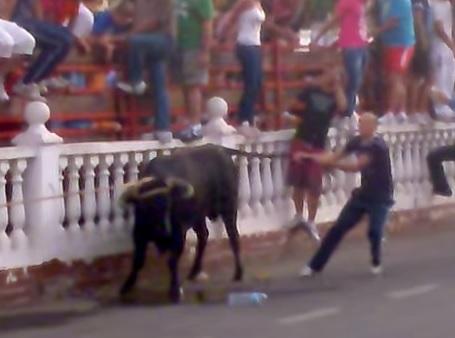 Casi 11.000 firmas contra el toro enmaromado de Villaluenga
