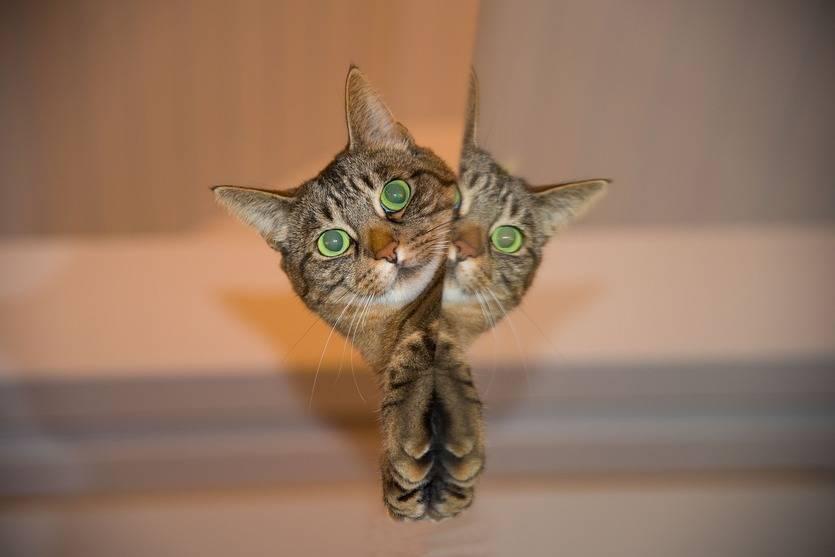 Gatos: compañeros con curiosas costumbres