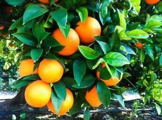 Comprarnaranja.es, naranjas 100 % naturales