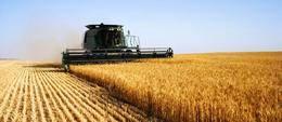 El BEI y Bankia financiar�n con 100 millones a pymes del sector agrario y agroalimentario