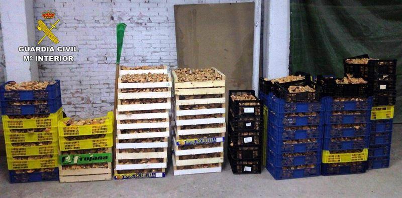 13 personas denunciadas por comercializar níscalos sin autorización en Guadalajara