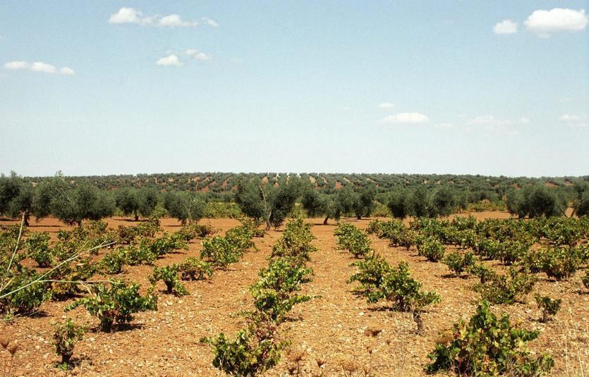 CaixaBank impulsa la internacionalización y la innovación de las empresas vitivinícolas en Fenavin