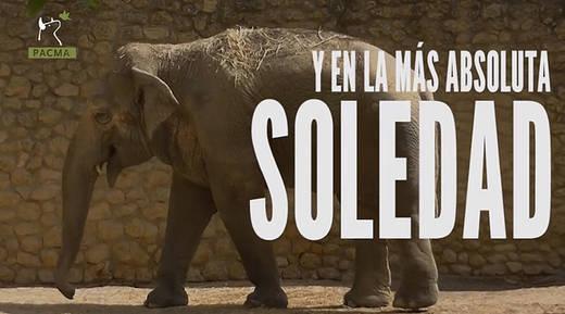 El drama de Flavia, una elefanta que lleva 40 años sola en el zoo de Córdoba