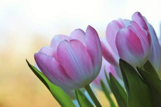 Enviar flores a domicilio: lo más trendy este 2018