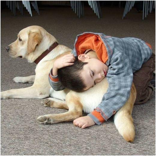 Terapeutas caninos, actores principales del bienestar de las personas