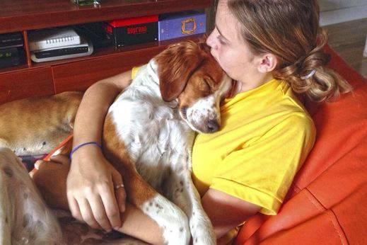 140.000 perros y gatos se abandonaron España en 2014