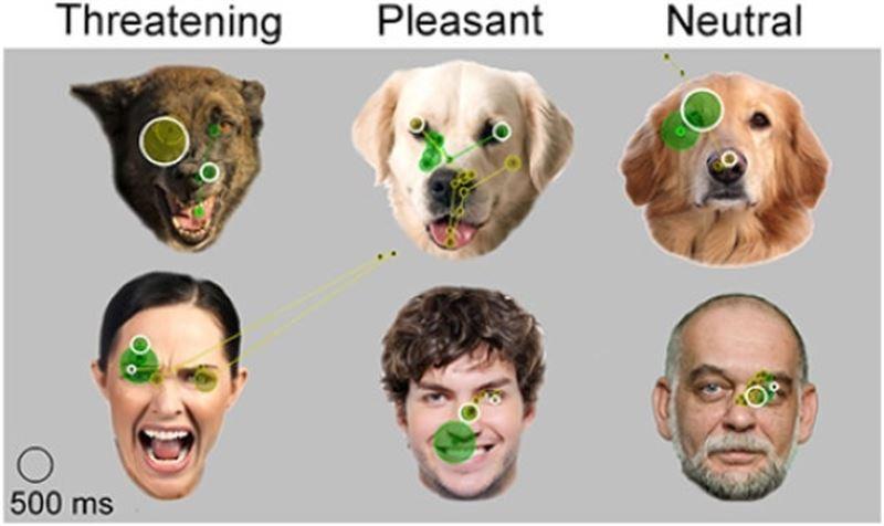 Los perros reconocen el estado emocional mirando a nuestros ojos y el resto del rostro