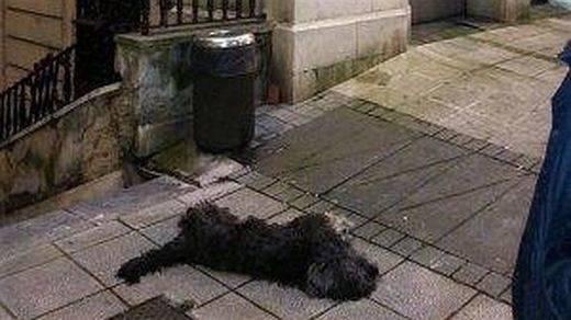 Piden 9 meses por matar a patadas a un perro en Santander