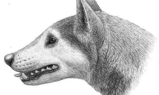 Así eran los perros en América del Norte hace 12 millones de años