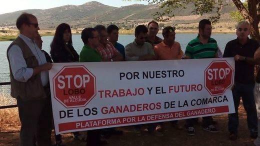 Los ganaderos de Valle de Alcudia se concentran contra la posible introducción artificial del lobo