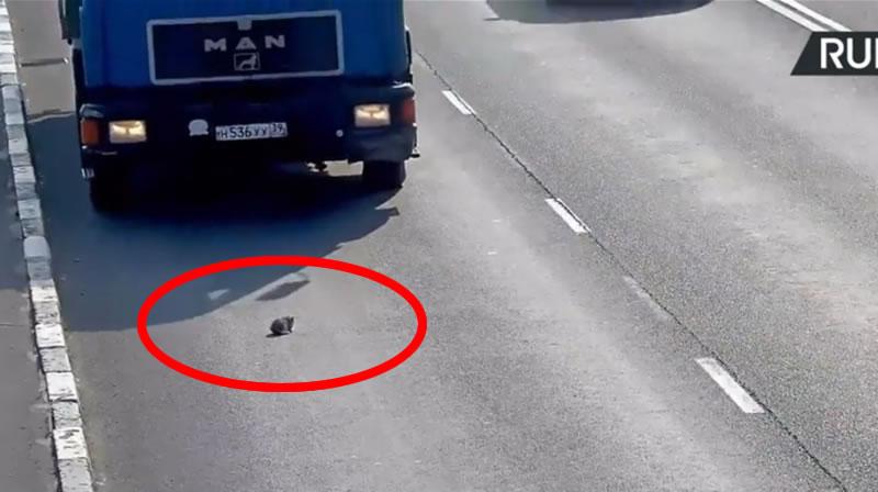 Vídeo de impacto: rescatan a un gato en plena autopista