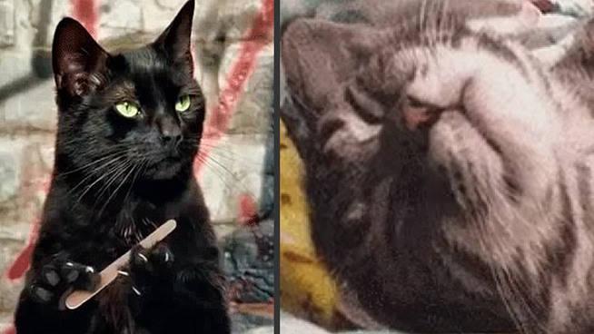 El 'duelo de los gatos' entre PP e IU en redes sociales: ¿batalla electoral o política basura?