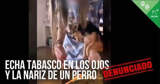 Denuncian maltrato a un perro echándole tabasco a los ojos