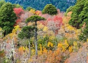 Los bosques más espectaculares del mundo