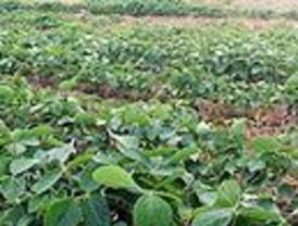 El gobierno busca aumentar la producción del campo